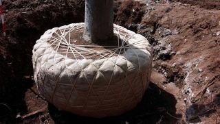 重機にて掘り取りますが、最後は手作業で成形し根巻きをします。写真のケヤキは小さめで、大きいものは直径2.8m、高さ1.5mもの大きな根鉢となりました。
