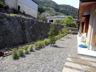 完成 土側溝との境にドウダンの生垣。3mピッチで中木を植栽しました。