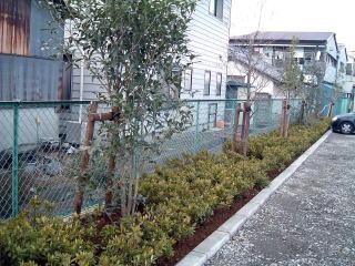 完成 低木にヒラドツツジを、ところどころにキンモクセイやハナミズキなどの中木を配しています。