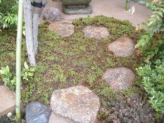 完全な中庭で日の当たりも強くないので杉苔やヤブコウジなどを使用しています。