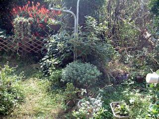 着工前 生垣と植木、雑草で生い茂った庭。