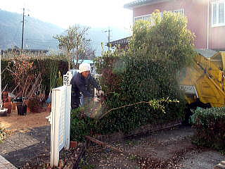 生垣を撤去から始めます。 伐根と整地をします。