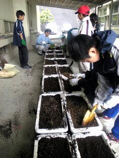 さぁ愛校作業当日 あいにくの雨 それにもかかわらずたくさんの父兄と子供たち いよいよ植え付け作業、プランターに植木土・肥料をたっぷり混ぜ込み 3種類の植物をランダムに植えていきます。 (アサガオは1箇所3粒ていど種をまきました。)