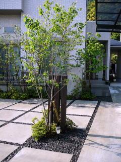 駐車場内のワンポイントとなるジューンベリーの背後に木材のモニュメントを設置。少し殺風景だった景色がグッと引き立ちます。
