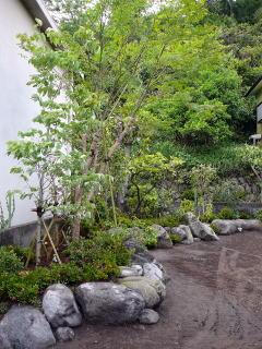 施工前までは壁面に沿って様々な樹木が羅列しているだけでしたが、一度すべての樹木を移植し、土台を作り、並び替えました。