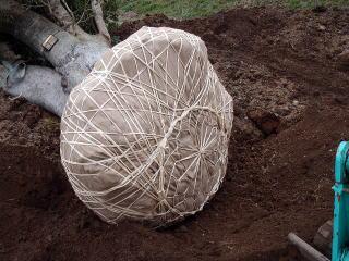 底はこんな感じ。これをしっかりやっておかないと土が崩れ、根を乾燥させてしまい傷めてしまいます。