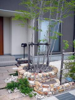 二段式の花壇です。円を描いた上段には株立ちのアオハダ。玄関脇を固めるシンボルツリーとして圧倒的な存在感を持っています。