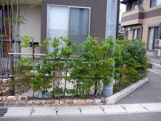 生垣にはシラカシを使用。目隠しも兼ねて、夏には日陰も作ってくれます。