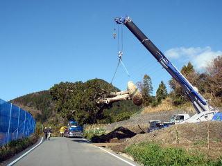 70tラフタークレーンで吊っているところ。重さはだいたい10tちょっとくらいでした。根鉢をかなり小さく作ったことを考えるとかなりの重さです。