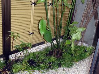 既存の樹木を配置換えし、キンモクセイを伐採、新たにアオキを植栽しました。中庭ということで日照が限られているため、陰樹を選びました。地被としてリュウノヒゲ、万両、ヤブコウジ、ヤブランを植えました。