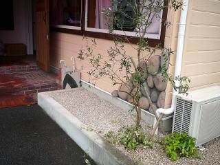 入り口脇のオリーブの根元にヘデラ。 今回洋風をかもし出すために3種類のつる性植物を使用。