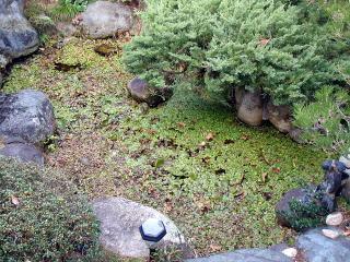 施工前  水草が全体を覆い水もほとんど見えない状態。オーバーフロー用の排水管が設置してありましたが、水面は更にそこから10cmくらい下。それ以上は水が留まらないそうです。