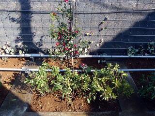 最後に植栽を施し完成。かなり手が掛かりますが、土壌はしっかりと改良され樹木が活きてくることでしょう。