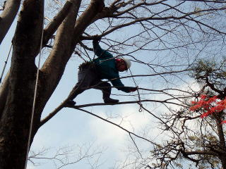 時にはかなりの細枝にまで・・・。下で見てる方が怖かったりします^^;