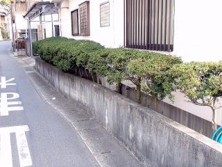 施工前の風景。間延びしてしまったツゲが植えてありました。