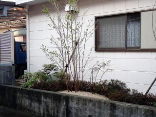 植栽はメインにナツツバキ。他に実物のジュンベリーや ブルーベリーを植えました。