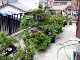 面倒の見切れなくなった盆栽や植木鉢を回収・処分する依頼も承っております。