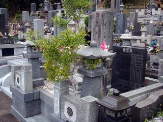 着手前 墓地内にたくさん散らかる落葉の原因はコレ。 実生で勝手に生えたモチノキ。墓地で度々見られますね。