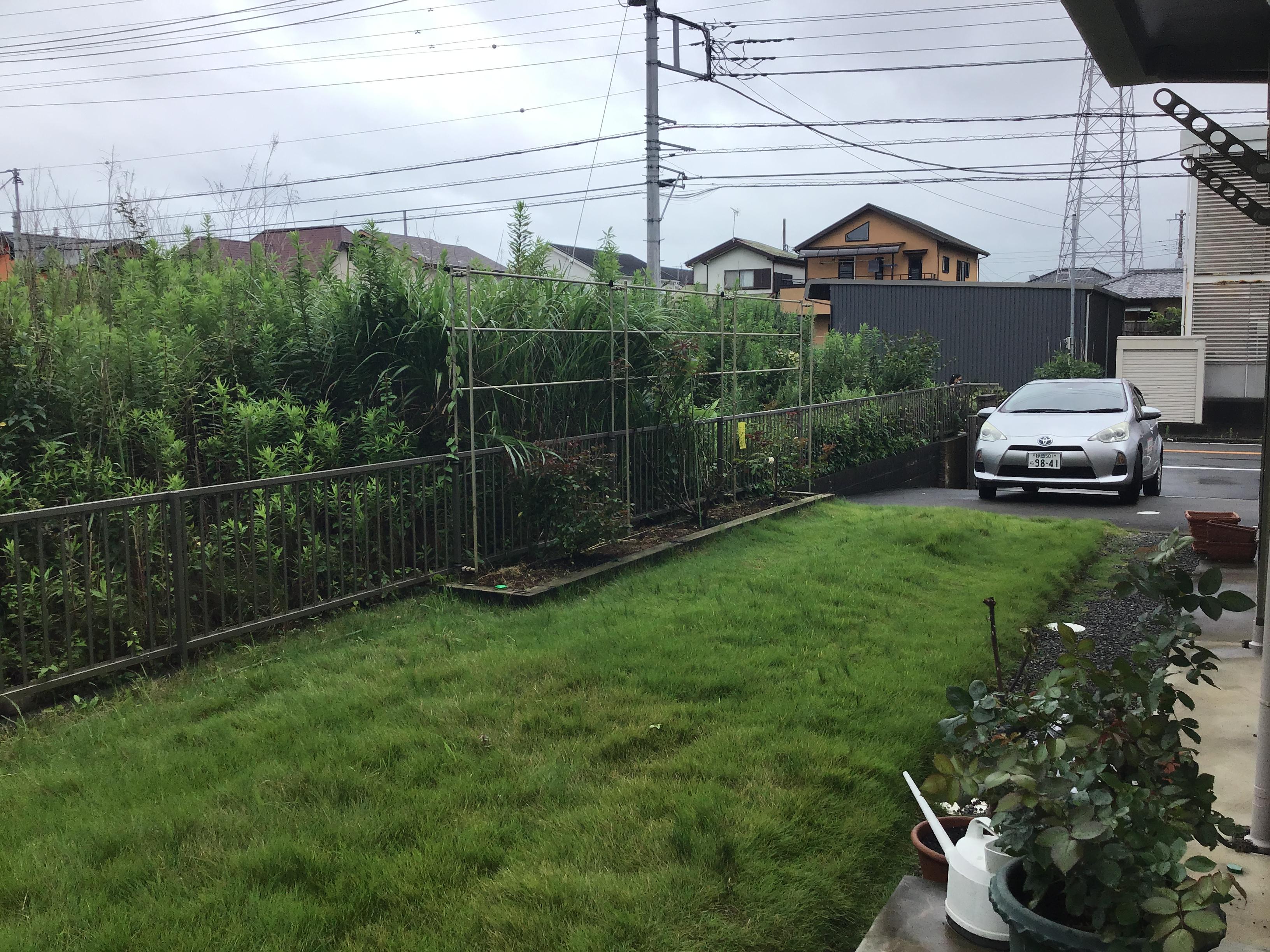 放置され分厚くなった芝地。こちらを改修していきます。