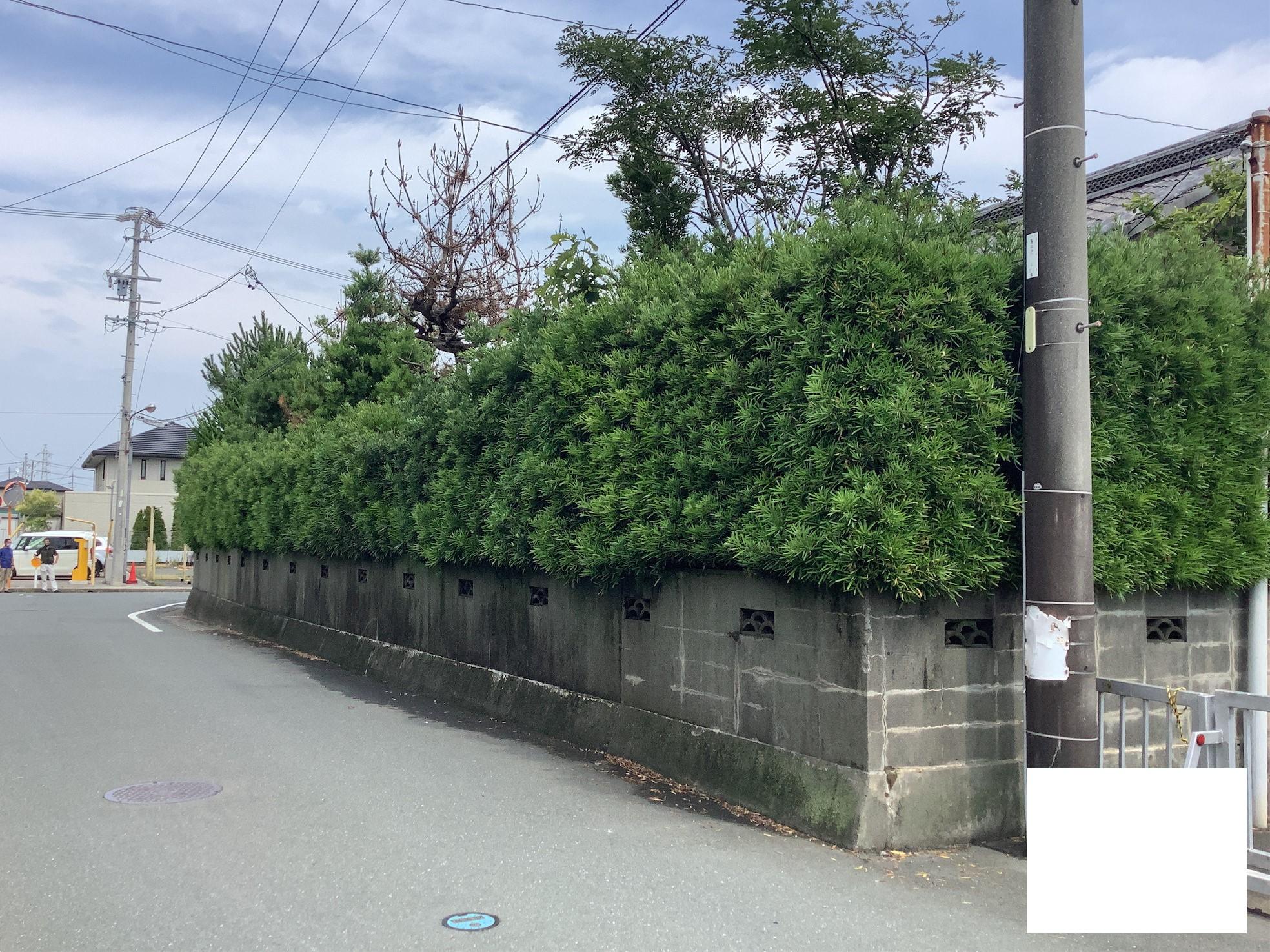 【着工前】<br/>道路沿いにホソバ(マキ)の生垣が並んでいます…ぼさぼさ…